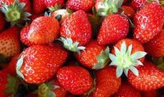 4月29日祝日開催!高いけど食べたい!この時期旬のいちごを思う存分食べよう!